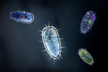 badanie wody mikrobiologia